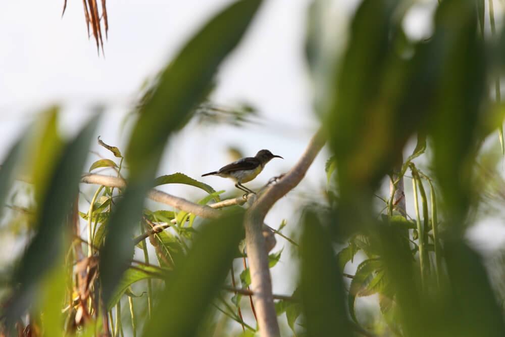 Birds in Vaidyagrama garden