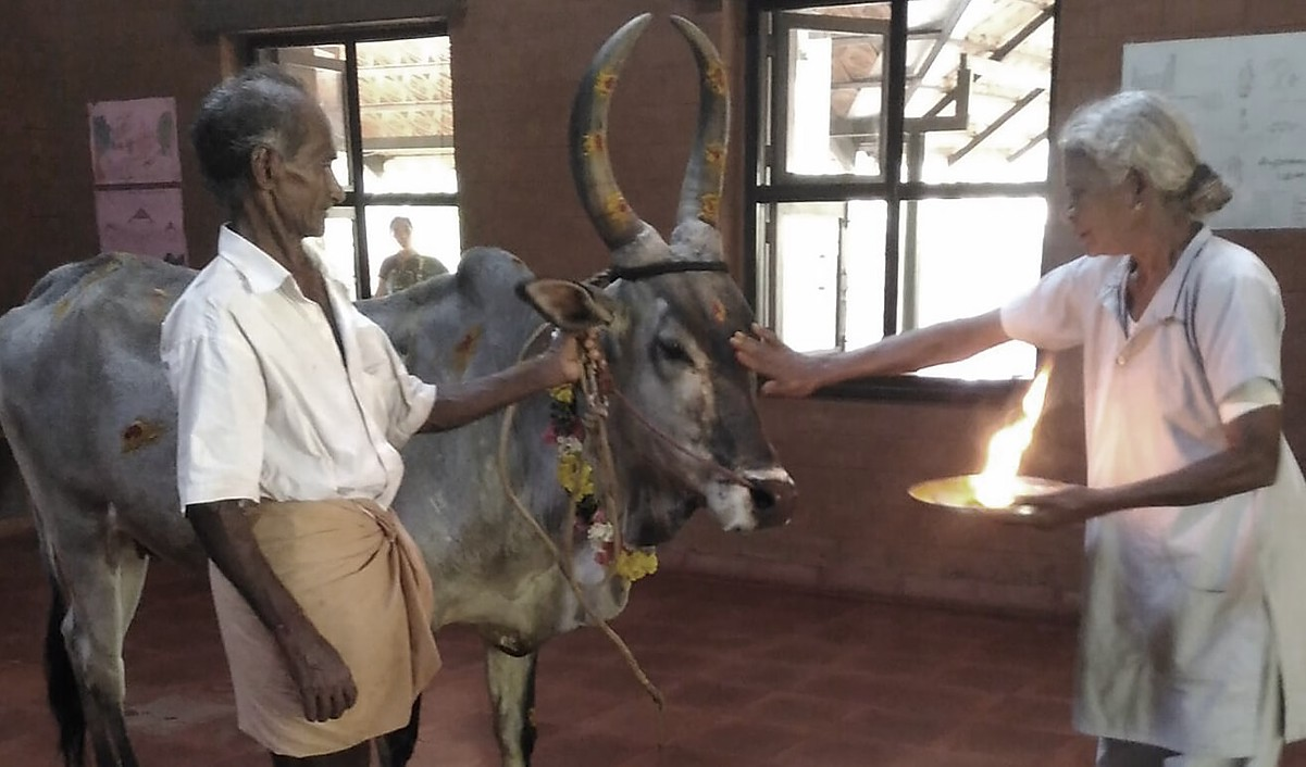 Cow pooja at Vaidyagrama