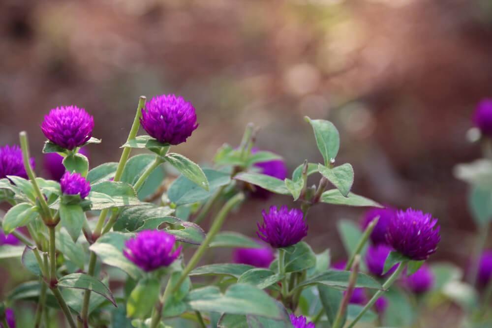 Flowers in Vaidyagrama garden